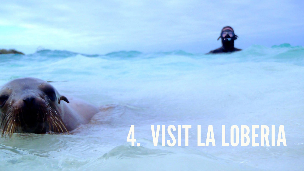 Swim with sea lions in Galapagos