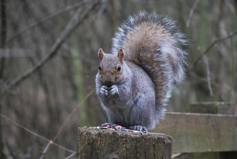 squirrell 2_edited.jpg