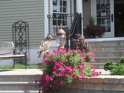 Hawk at entrance