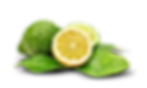 bergamot yellow and green.png
