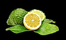 bergamot yellow and green.png