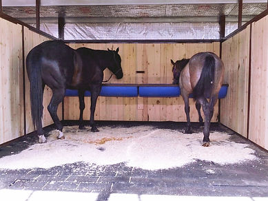 Horses in Stall lighter.jpg