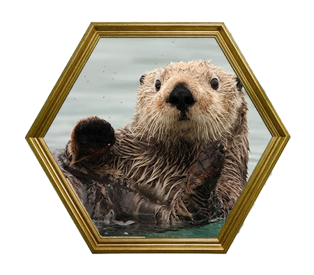 Zeeotter.png