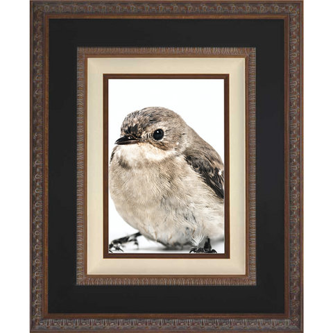 20-Anne-Houwing-Vogel.png