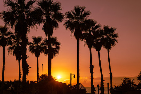 Palm trees on the beach at sunset time