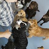 Los perros con entrenador