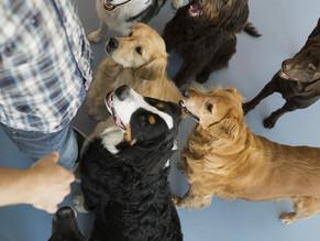 Οι πέντε τύποι προσωπικότητας των σκύλων