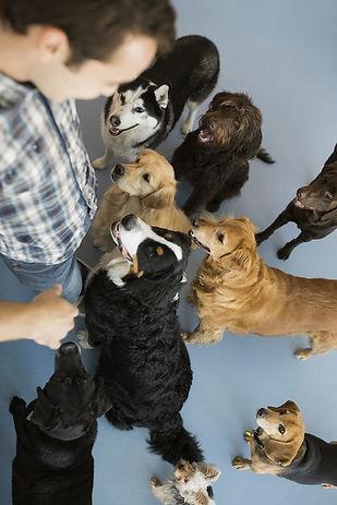 Σκύλοι κοιτούν τον βοηθό κτηνιάτρου