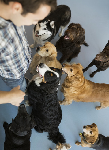 5 Dog Trainers in the DC, MD, VA