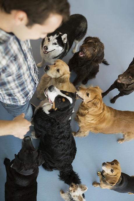 Honden met trainer