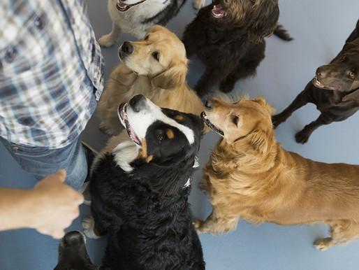 Μπορούν τα σκυλιά να καταλάβουν τι λέμε;