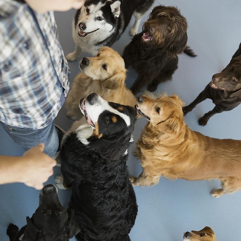 Dog's Night Out w/ Spartanburg Humane Society