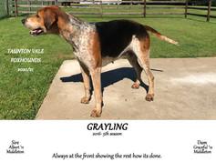 Grayling senior.jpg