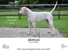 Graylag.jpg