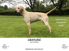 Grayling.jpg