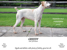 Greedy.jpg