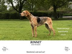 Bonnet.jpg