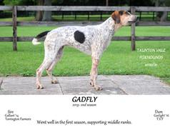 Gadfly.jpg