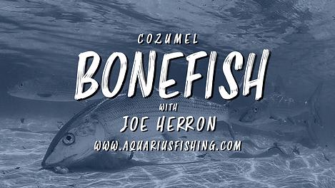 Bonefish.png