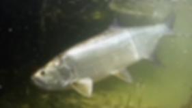 Auarius Fishing | Cozumel Fishery