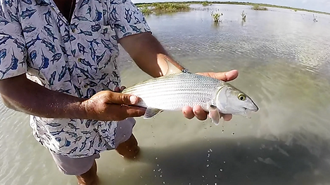 Cozumel bonefish trapon and snook