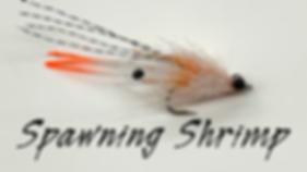 SpawningShrimp.png