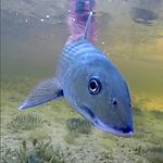 Cozumel fly fishing
