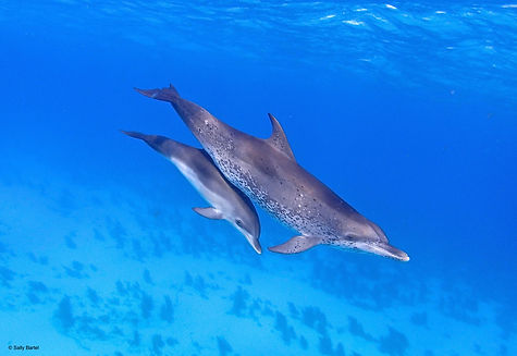 dolphin mom and baby.jpeg