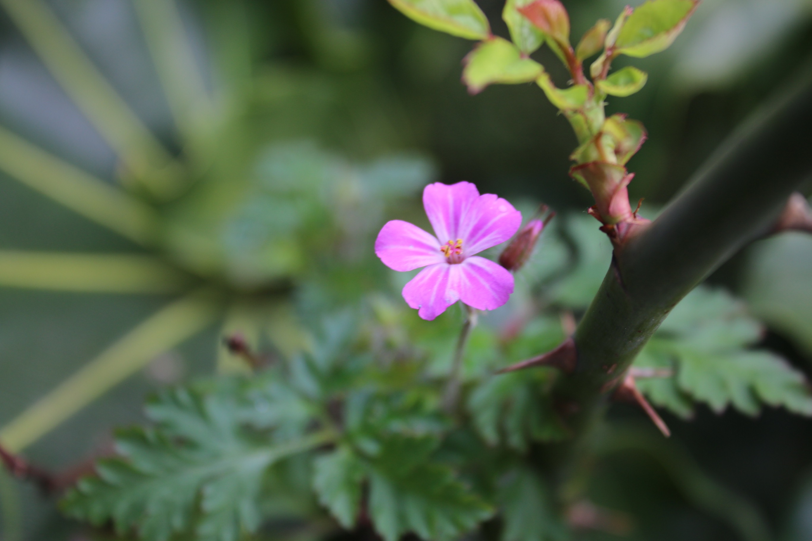 Small and Solitary