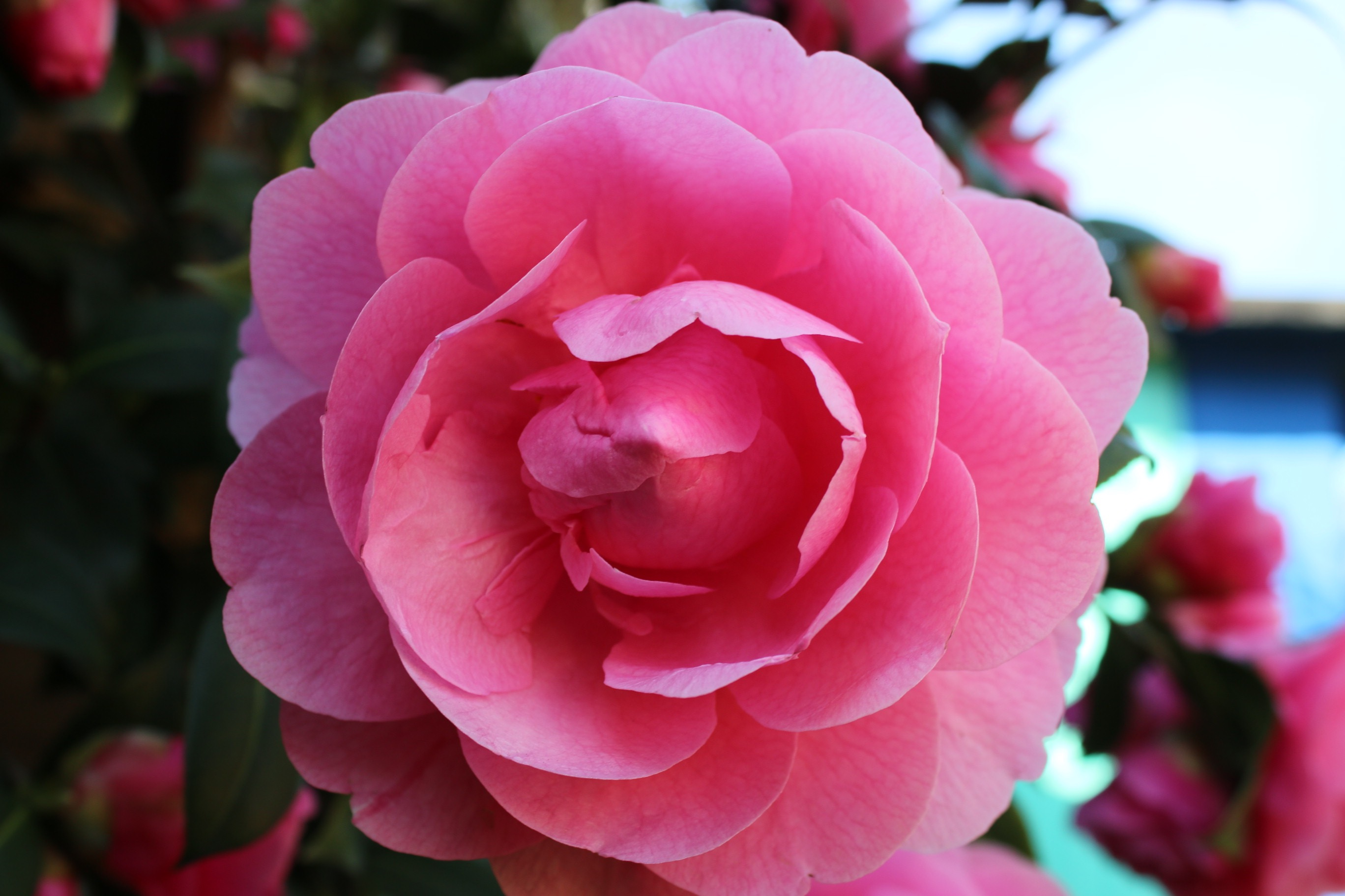 Complex Camellia