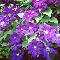 Bosey Garden Flowers