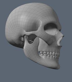 Skull WIP 4
