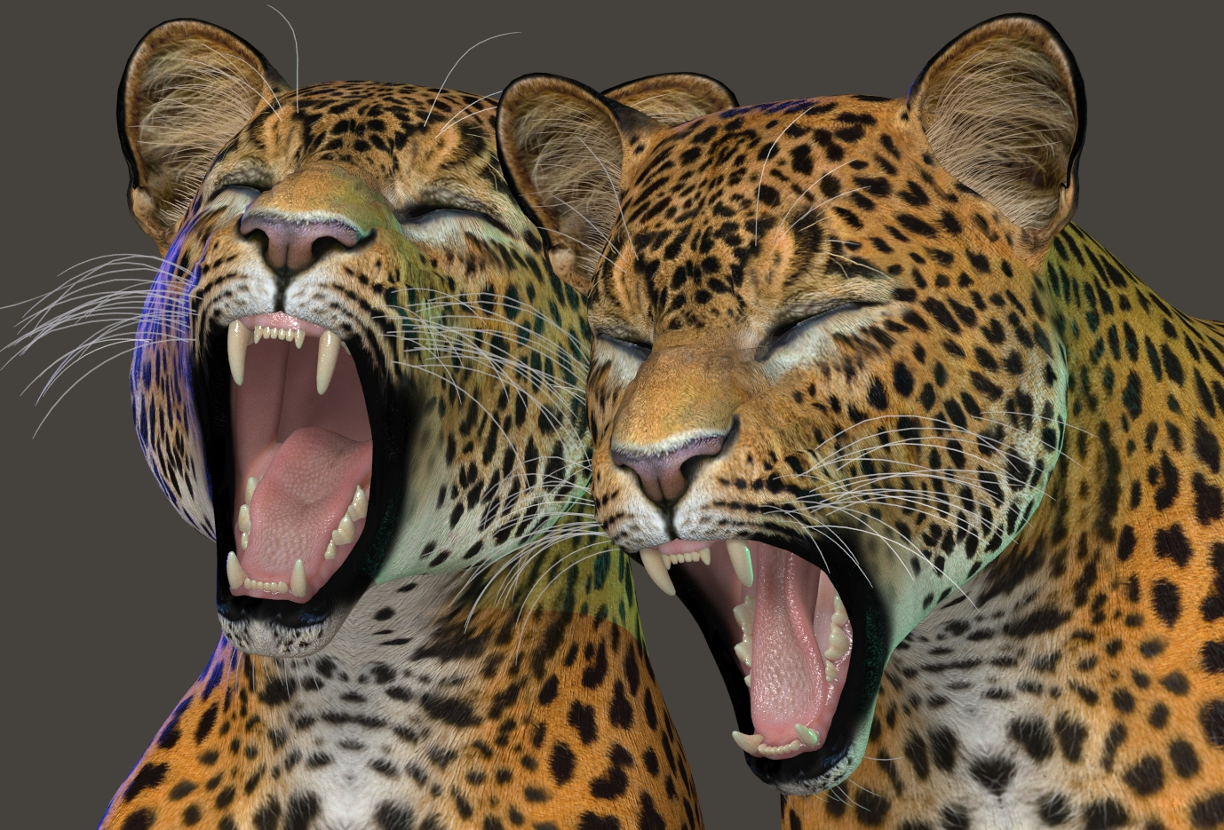 Leopard Yawns