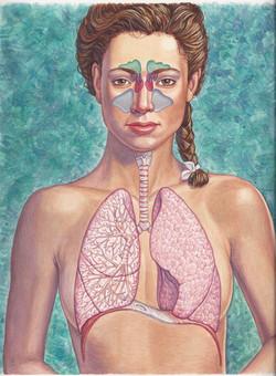 Respiratory And Sinuses