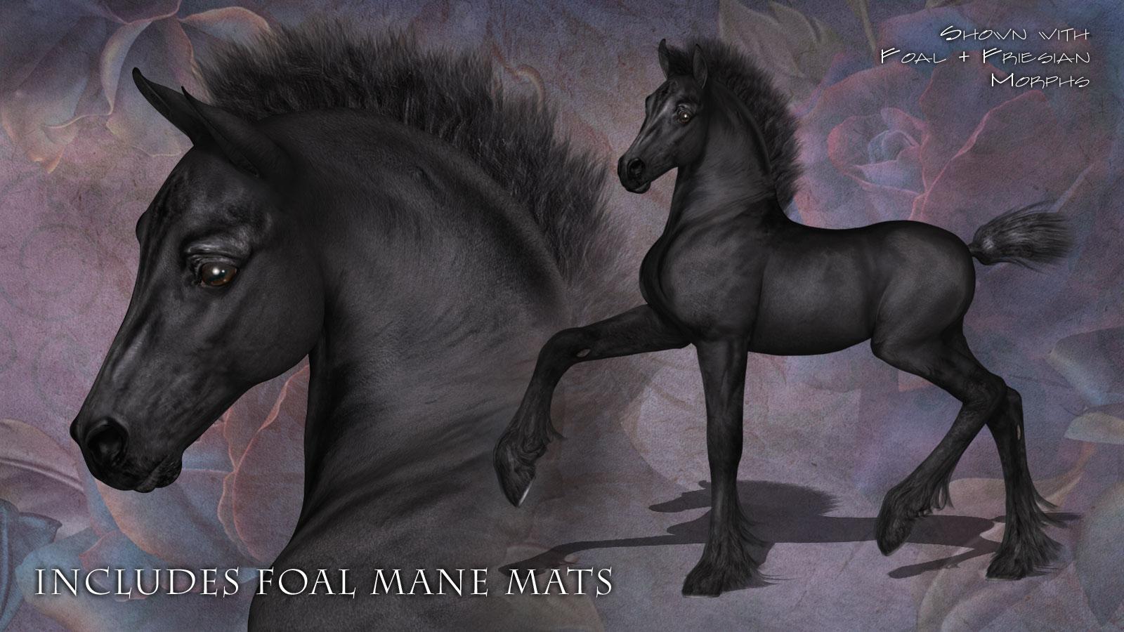 Friesian Foal