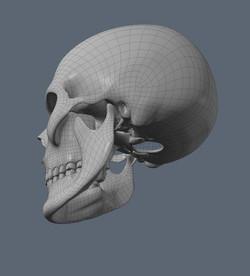 Skull WIP 6