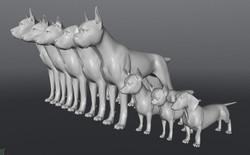 Dog Morphs