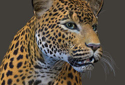 Leopard Model With Texture