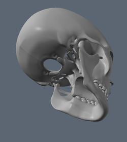 Skull WIP 5
