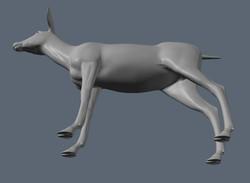 Mule Deer Inferior View