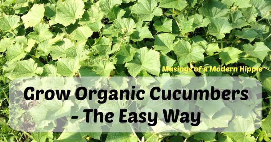 Grow Organic Cucumbers - The Easy Way