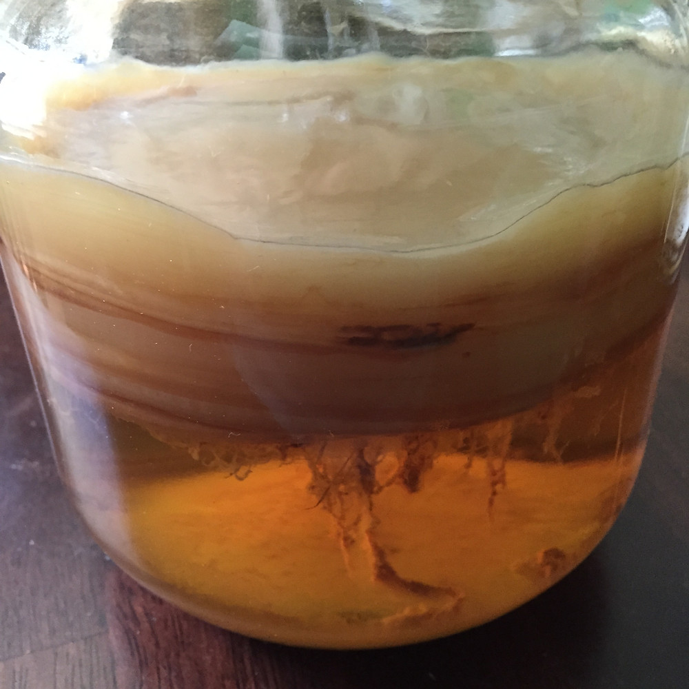 Kombucha for Beginners | Musings of a Modern Hippie