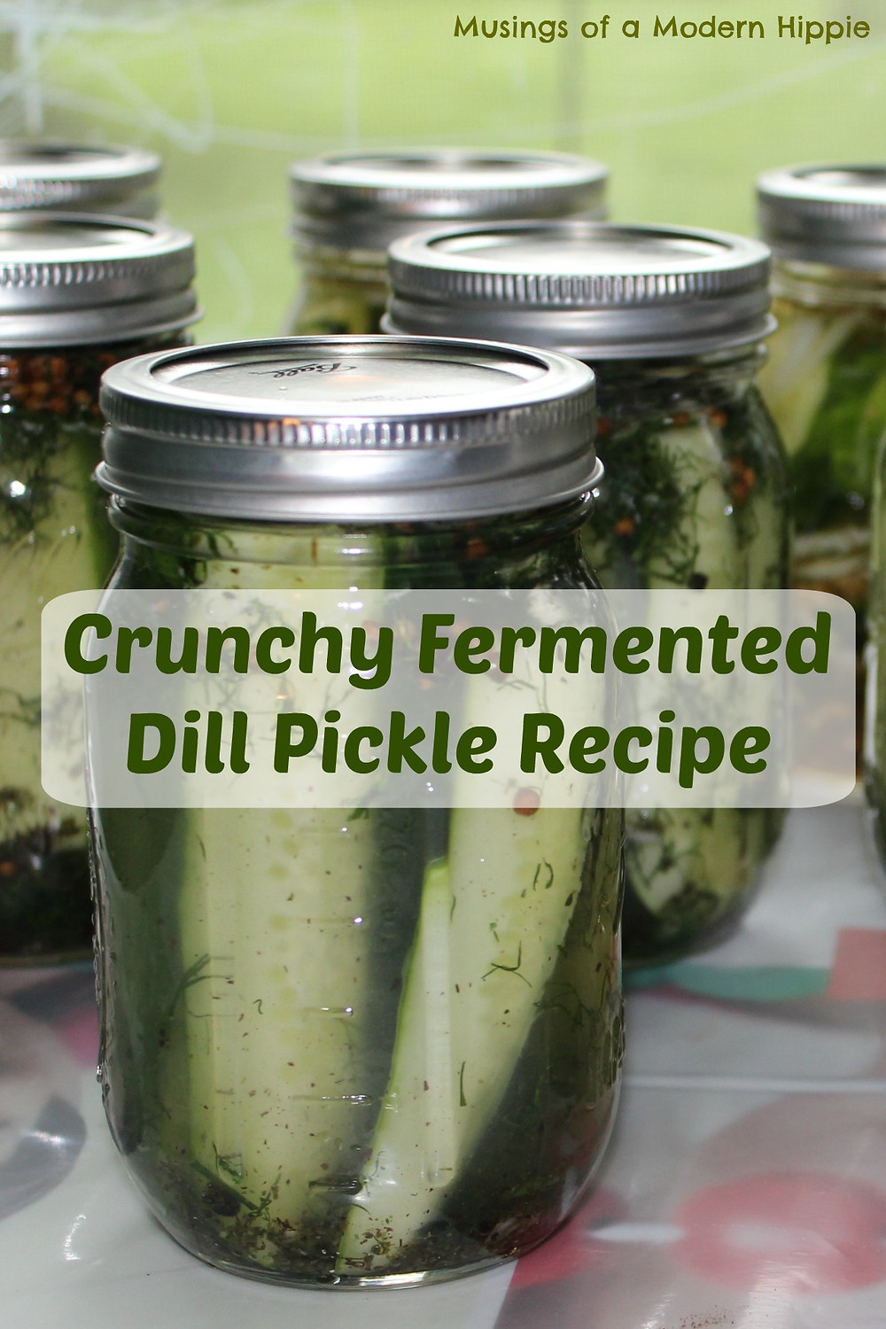 Crunchy Fermented Dill Pickles | Musings of a Modern Hippie