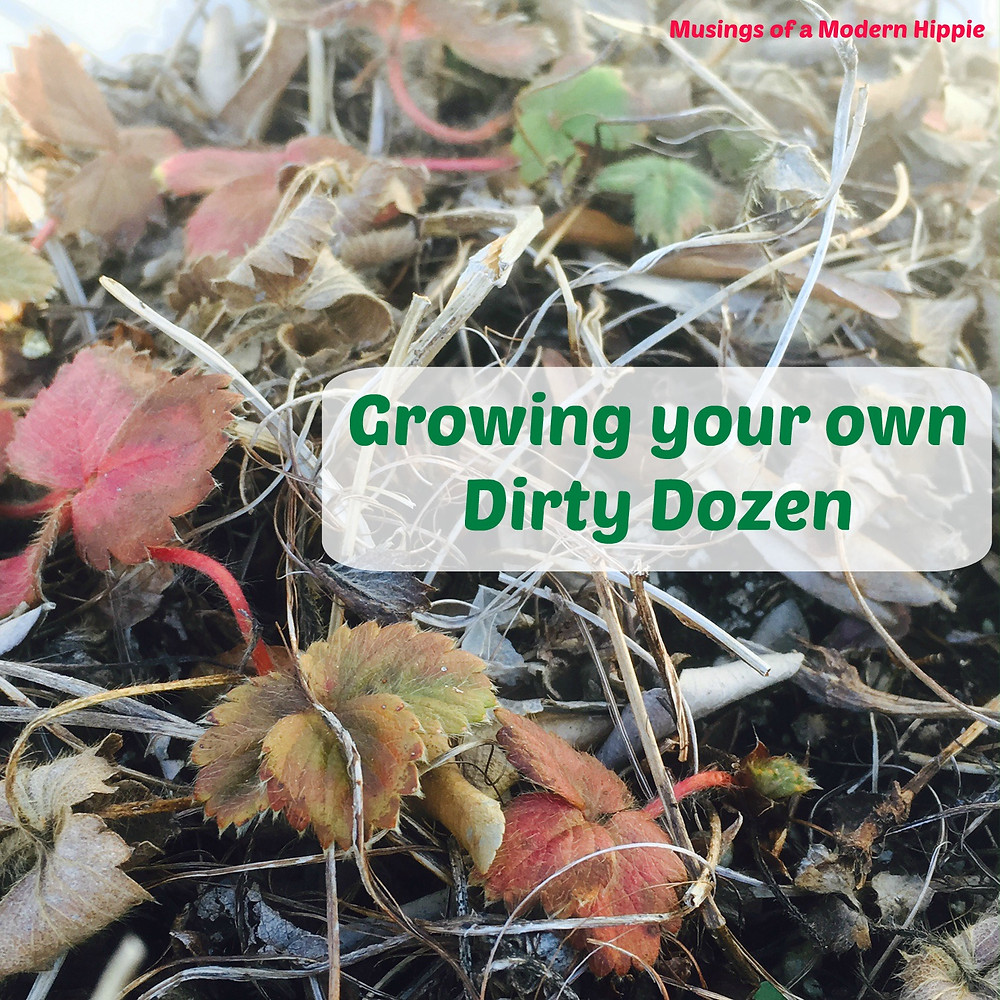 Grow Your Own Dirty Dozen | Musings of a Modern Hippie