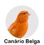 canario belga.png