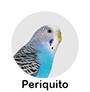 periquito.png