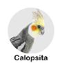 calopsita.png