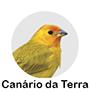 canario da terra.png
