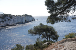 Calanque de Port-Pin (Cassis)
