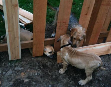 Meet Neighbors-ScotchPuppy.jpg
